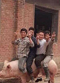你们想过猪的感受吗?