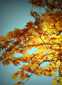 秋天唯美落叶意境大自然图片