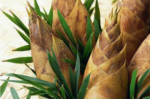 竹笋怎么剥皮 快速剥皮的两种方法