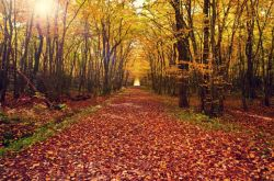 秋季生活常识 揭中秋佳节最养生的3种食物